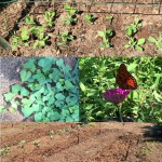 A diverse garden attracts pollinators and helps balance soil fertility. Photo by Molly Jameson.