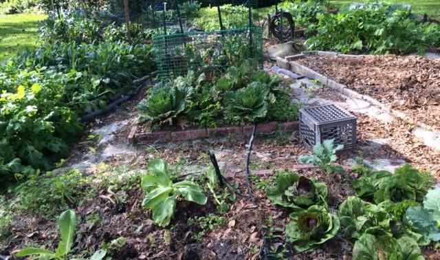 Harvesting Tips for Extending Your Fall Vegetable Garden » Gardening ...