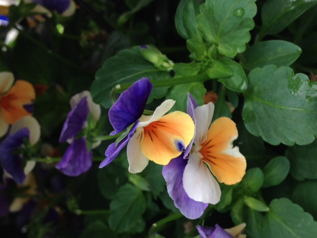 Plant Combinations for Fall Gardens