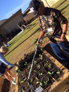 Shelter resident watering freshly planted lettuce.