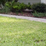 "February is not ""Fertilizer Time"" for Lawns"