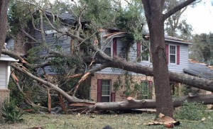 Even large oaks may fall during a tornado. Photo credit: northescambia.com