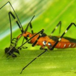 Stop and Take Notice of Beneficial Insects