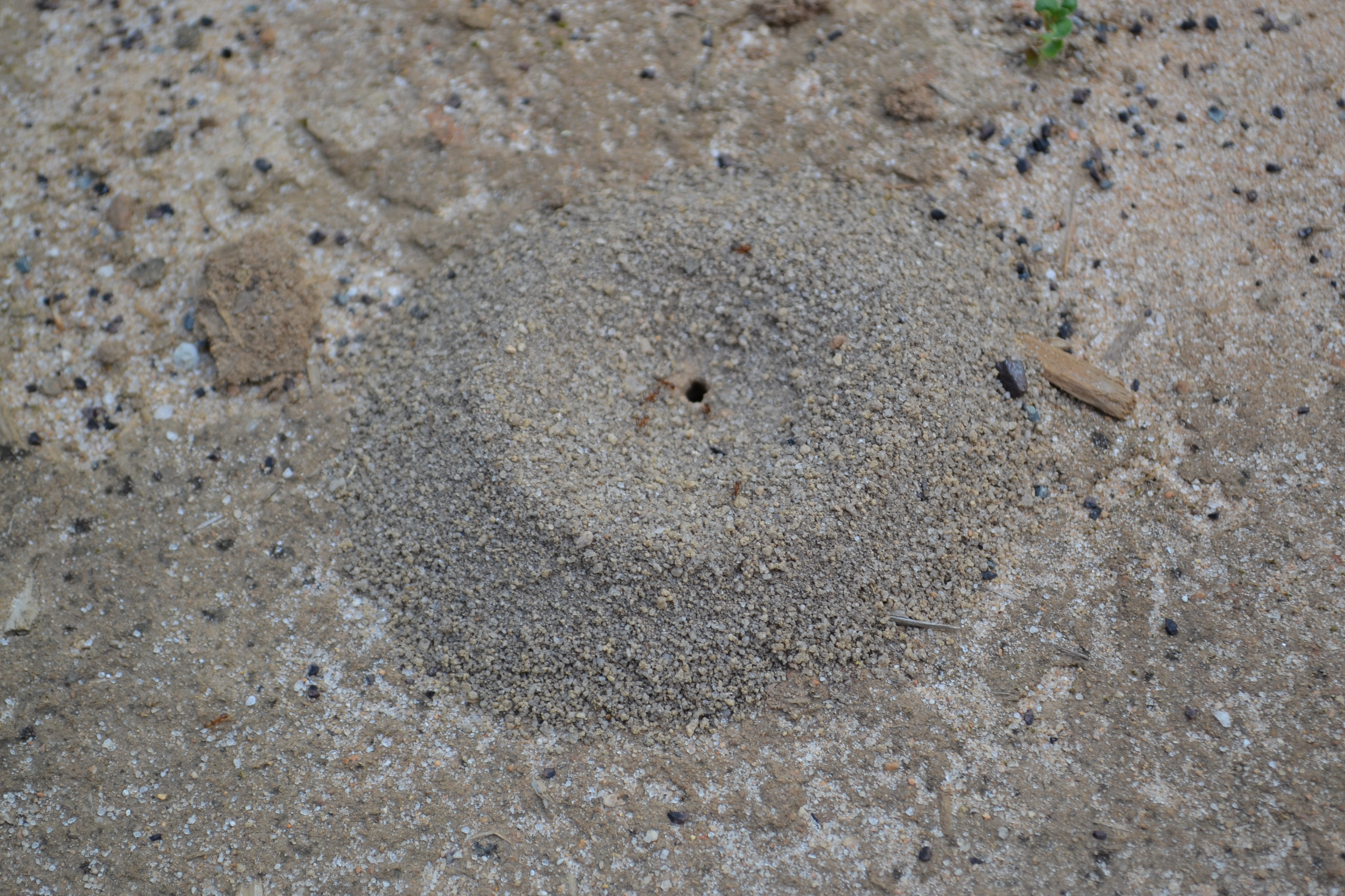 how to kill ant mounds