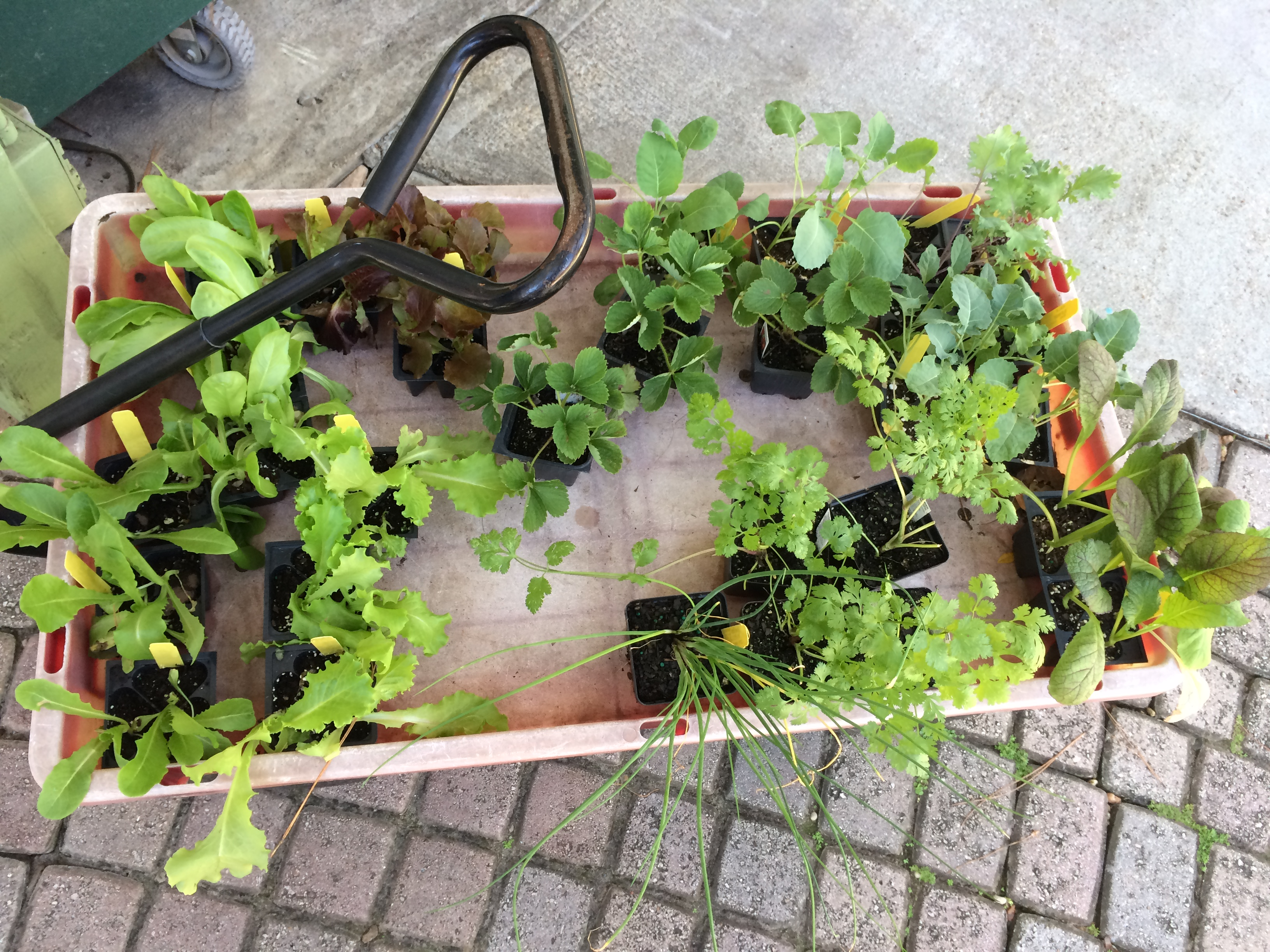 Don't Think You Have a Green Thumb? Try Container Gardening!
