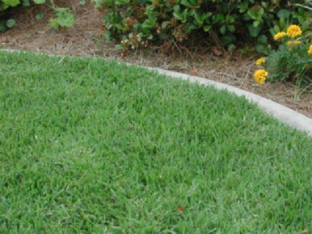 How to Water to Establish a Lawn