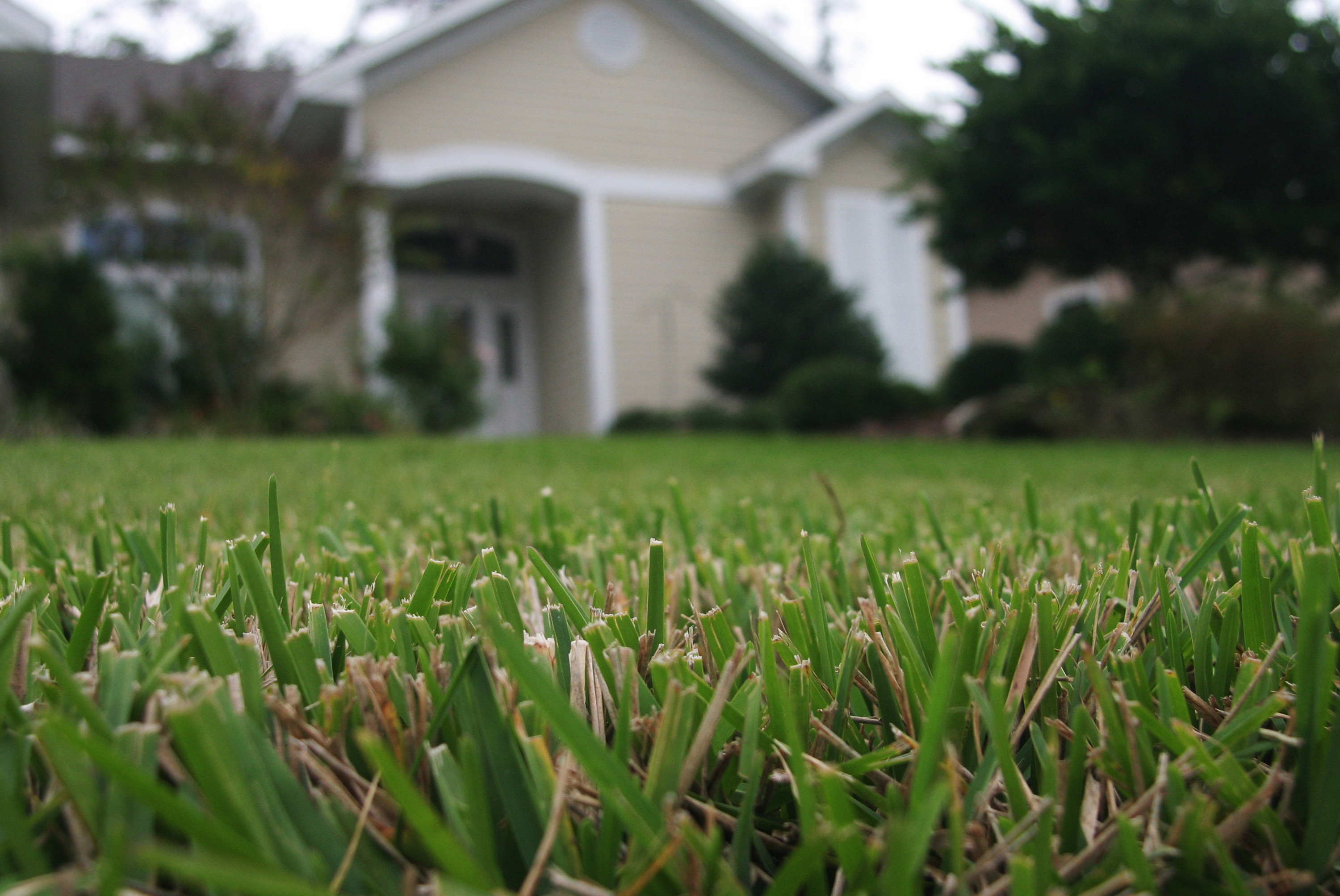 Timing is Everything for Spring Lawn Fertilizing