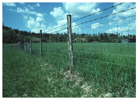 Fence Row Weed Control…Optional?