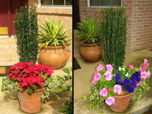Containers to brighten bare spots. Photo Credit: UF/IFAS Extension