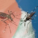 Avoid Mosquitoes Abroad and in Your Own Backyard