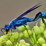 Cool Good Bug