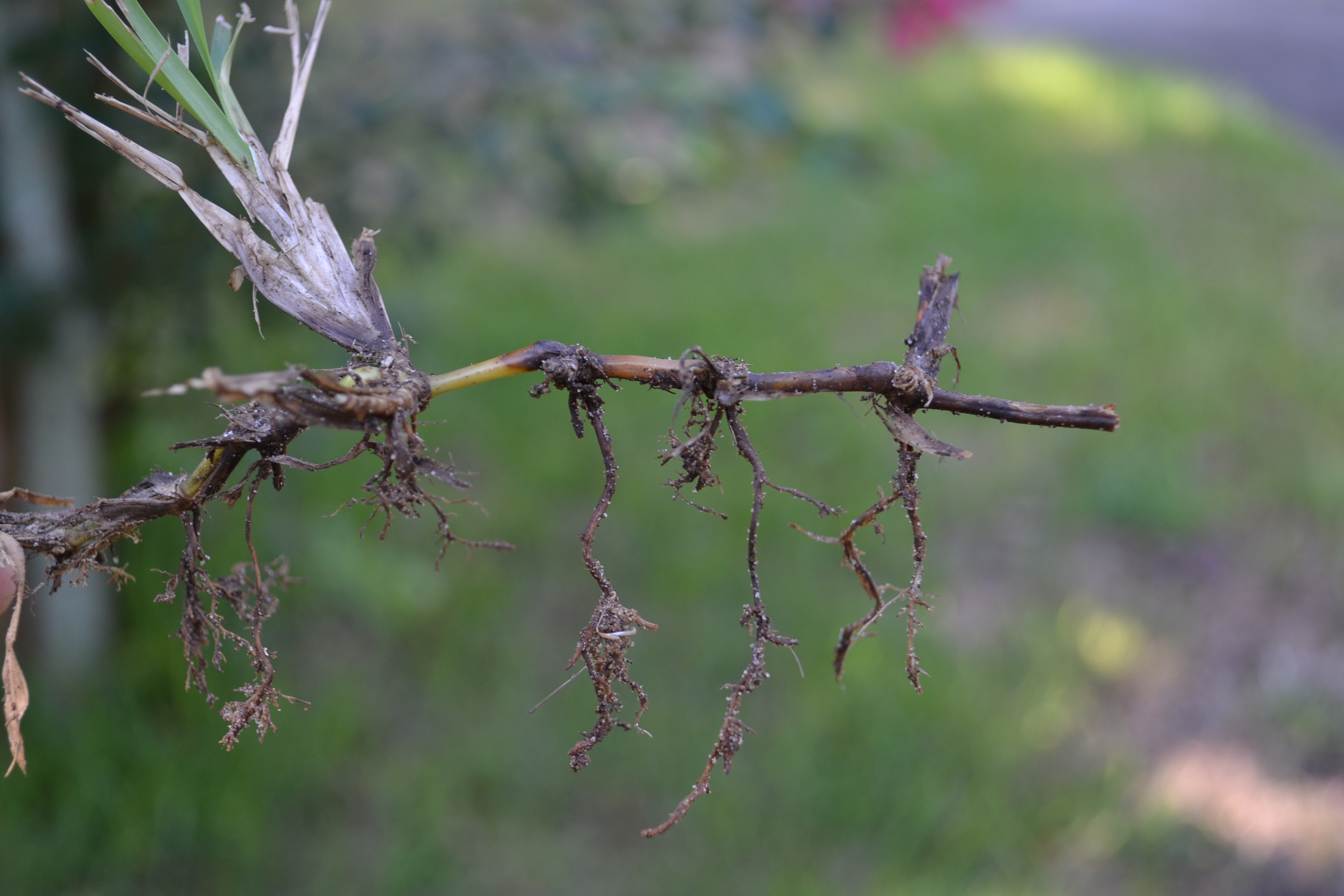 Look More Deeply for Causes of Leaf Wilt