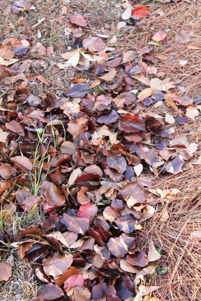 Reduce 100 Bags of Fall Leaves to Ten