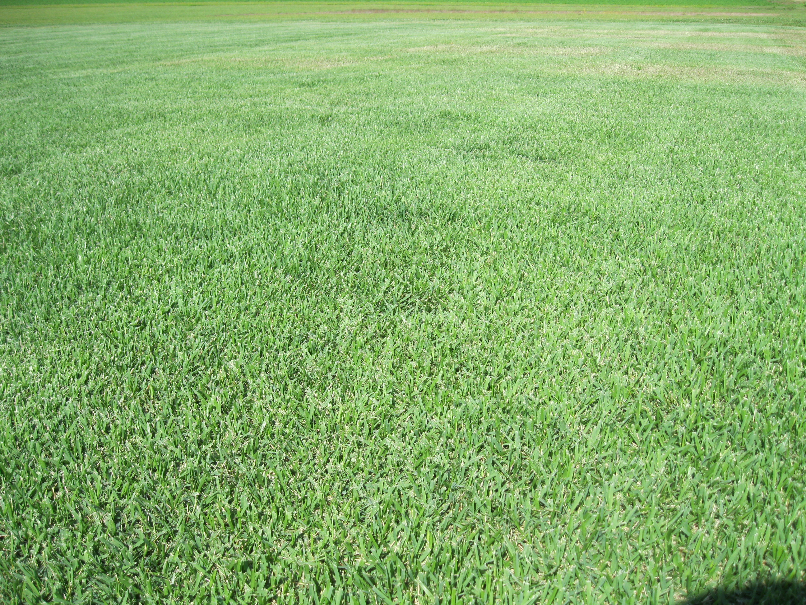 Rebounding a Lawn in Decline May Start with a Simple Fix