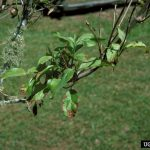 Are Your Dogwoods in Decline?