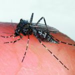 Take Steps to Minimize Mosquitos