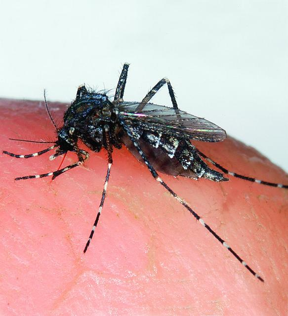 Take Steps to Minimize Mosquitoes