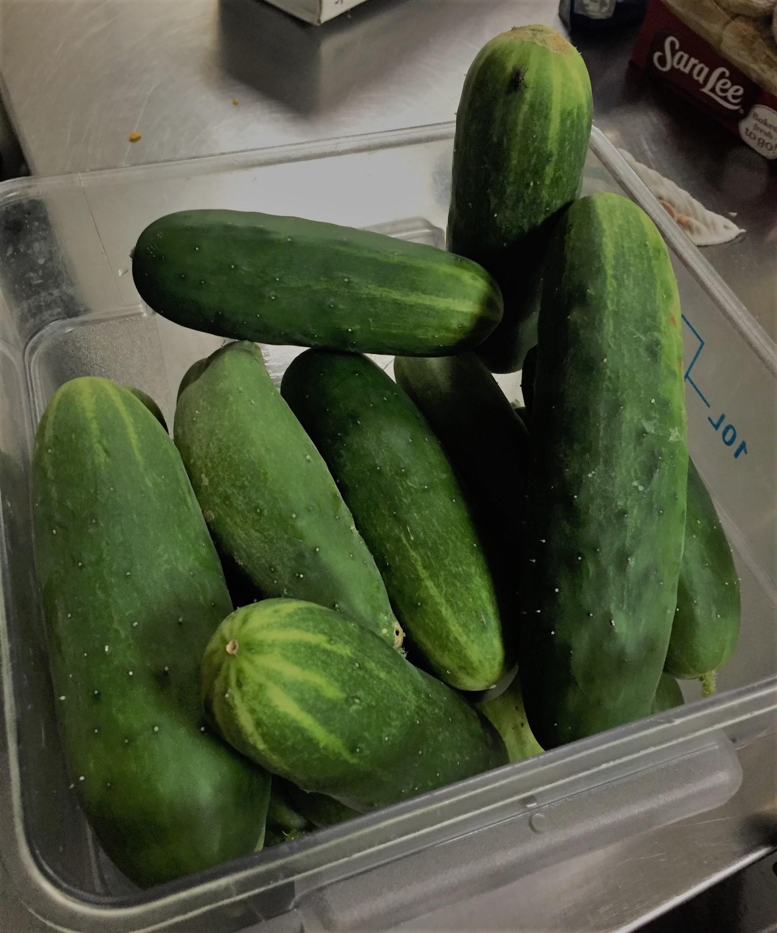 Video: Home Grown Cucumbers