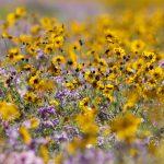 Celebrating and Attracting Pollinators