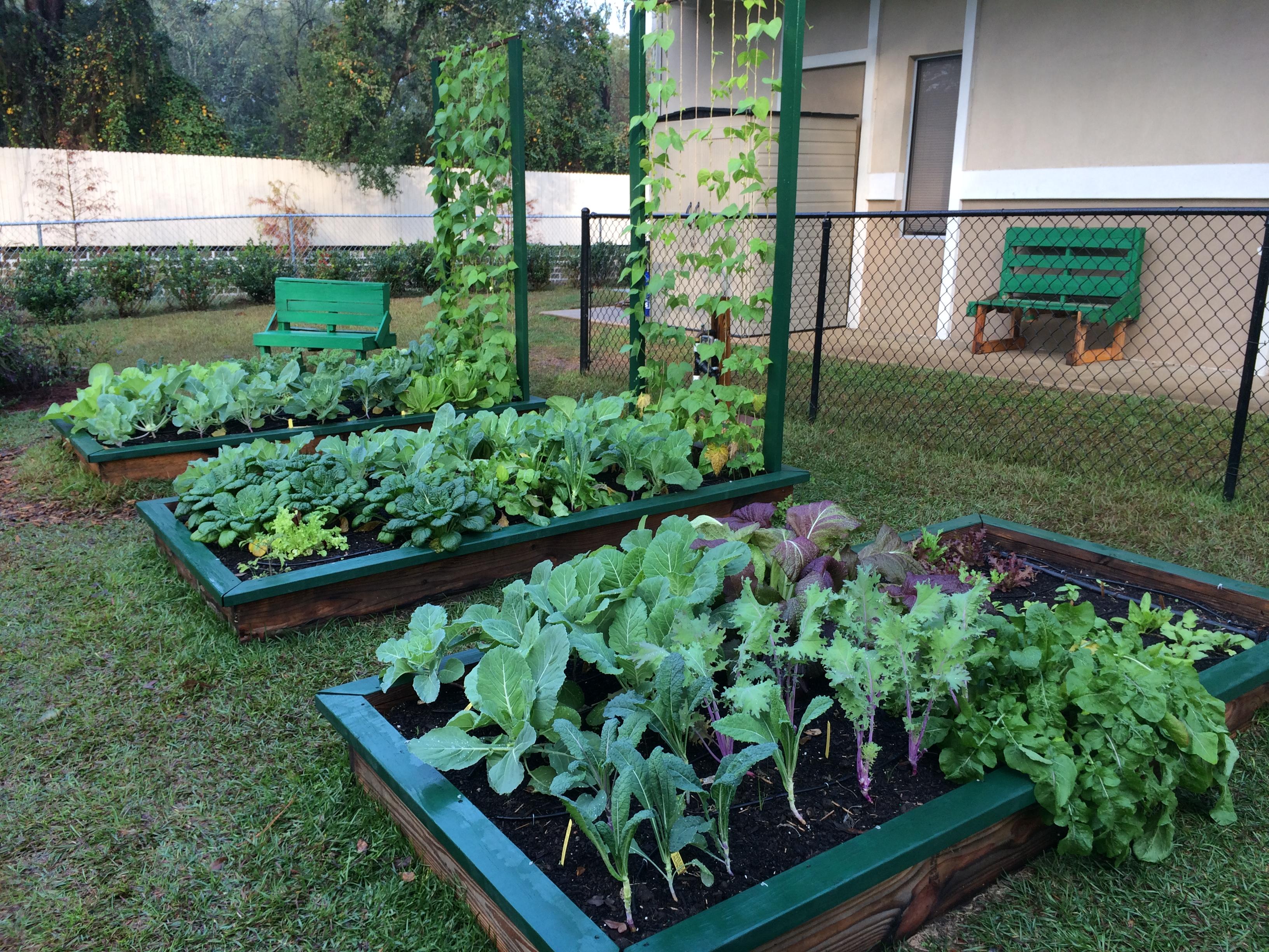 School Garden Gardening In The Panhandle