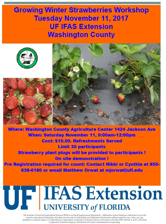 Growing Winter Strawberries Workshop
