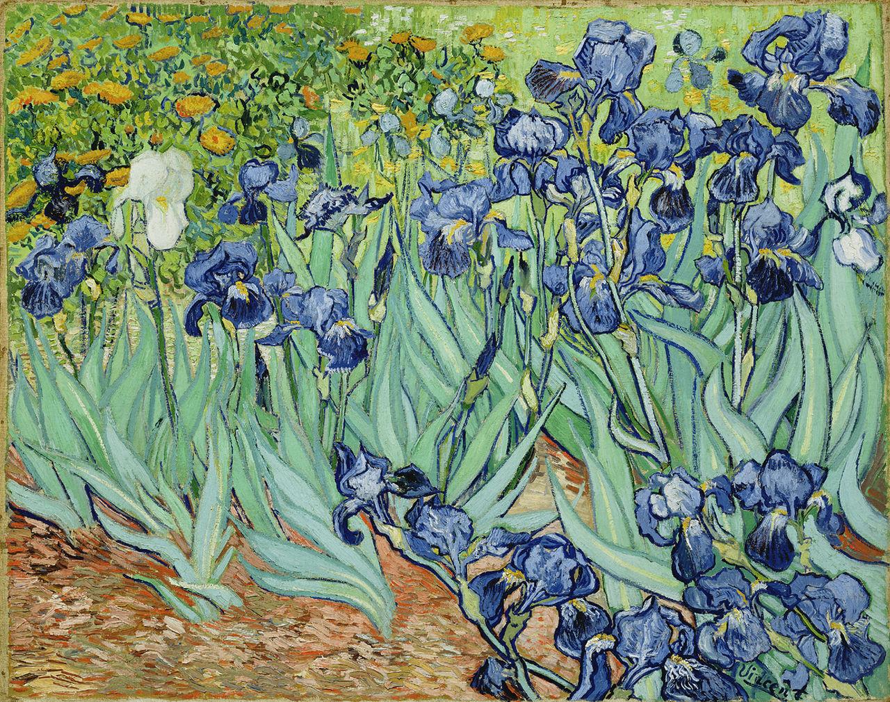 So many irises for the florida garden gardening in the panhandle so many irises for the florida garden izmirmasajfo