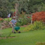 Gardener fertilizing yard