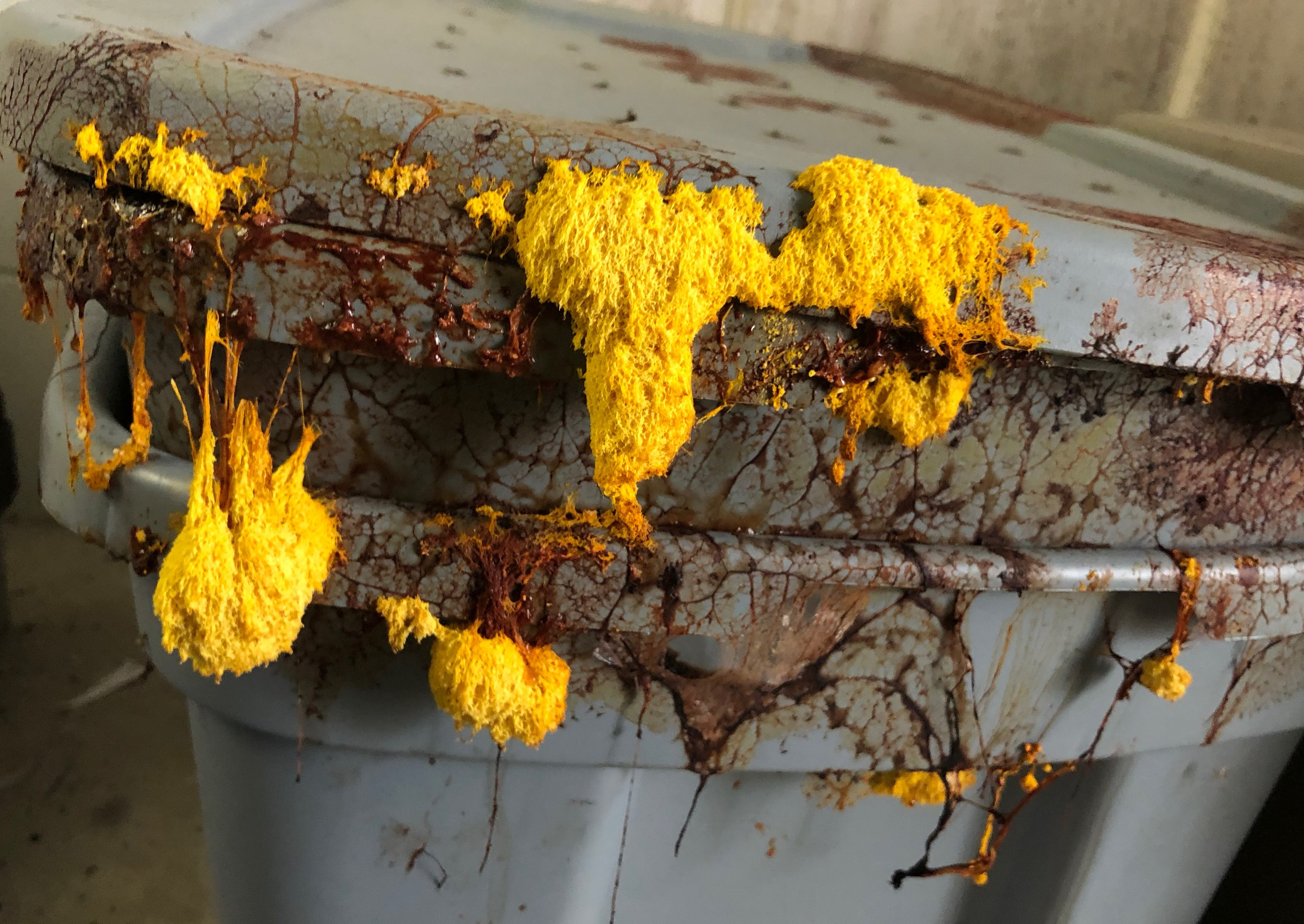 I Ain\'t Afraid of No Slime Mold » Gardening in the Panhandle