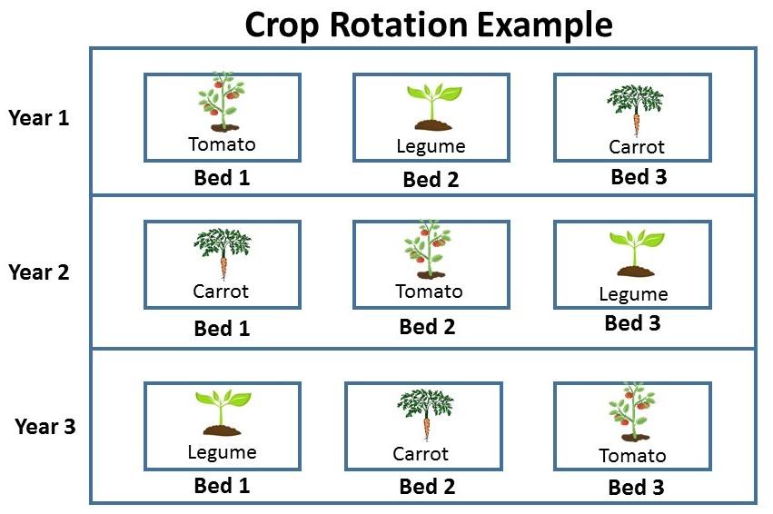 Planning the Garden: Crop Rotation