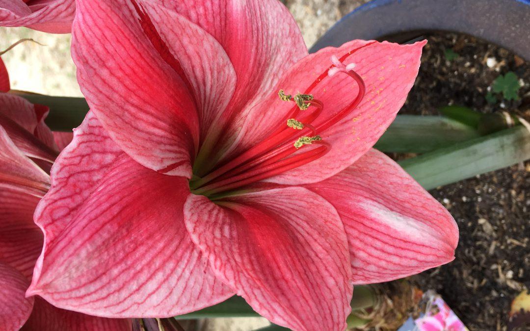 A Bloom Prettier than the Moon