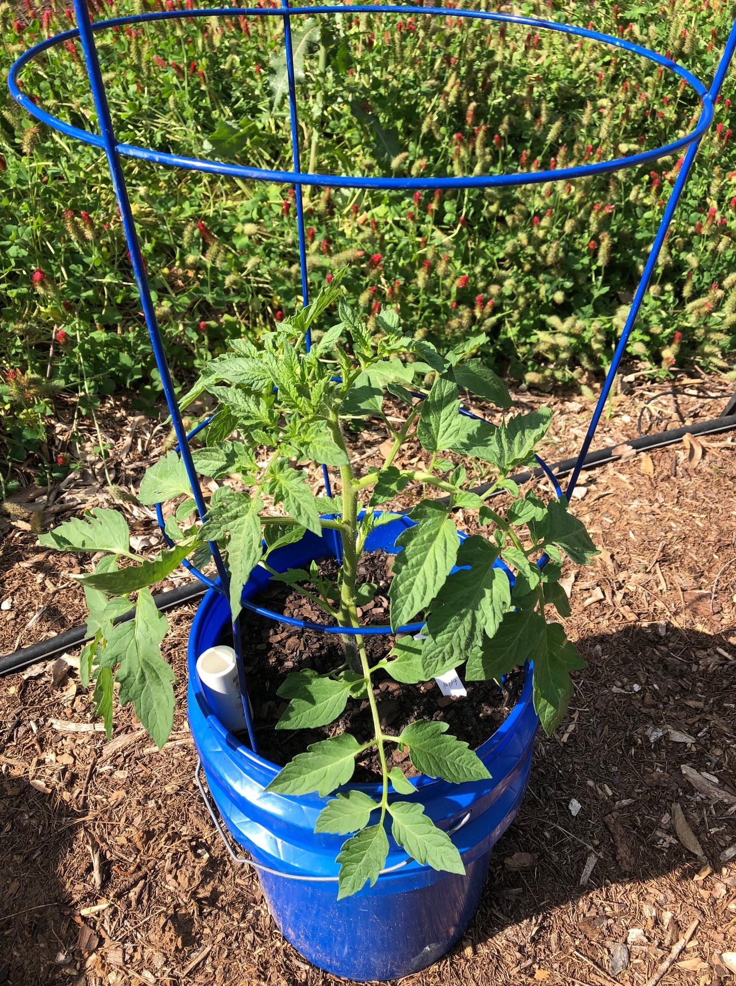 Beat The Heat With A Self Watering Container Garden Uf Ifas