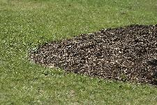 Is Colored Mulch Bad for the Environment?