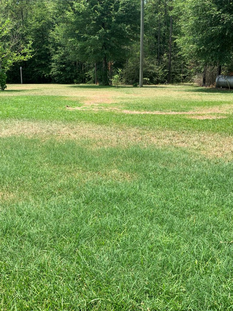 Rhizoctonia in a St. Augustinegrass lawn