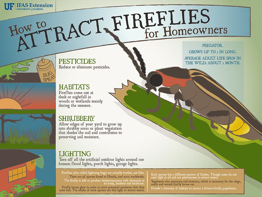 Fireflies – Nature's Fireworks