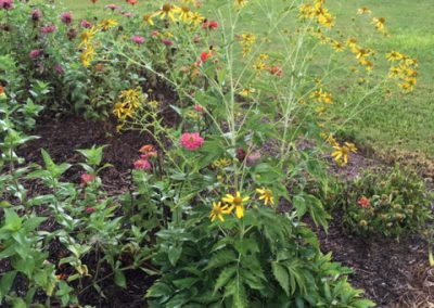 Perennial plant with yellow flowers