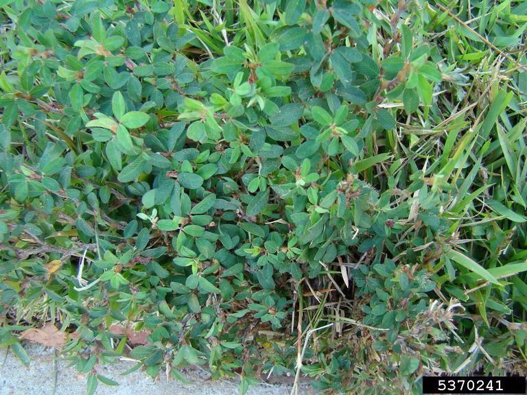 Creepy Weeds Indicate Problems