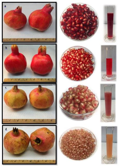 Fruit, aril, and juice characteristics of four pomegranate cultivars grown in Florida; fruit harvested in August 2018. a) 'Vkusnyi', b) 'Crab', c) 'Mack Glass', d) 'Ever Sweet'.