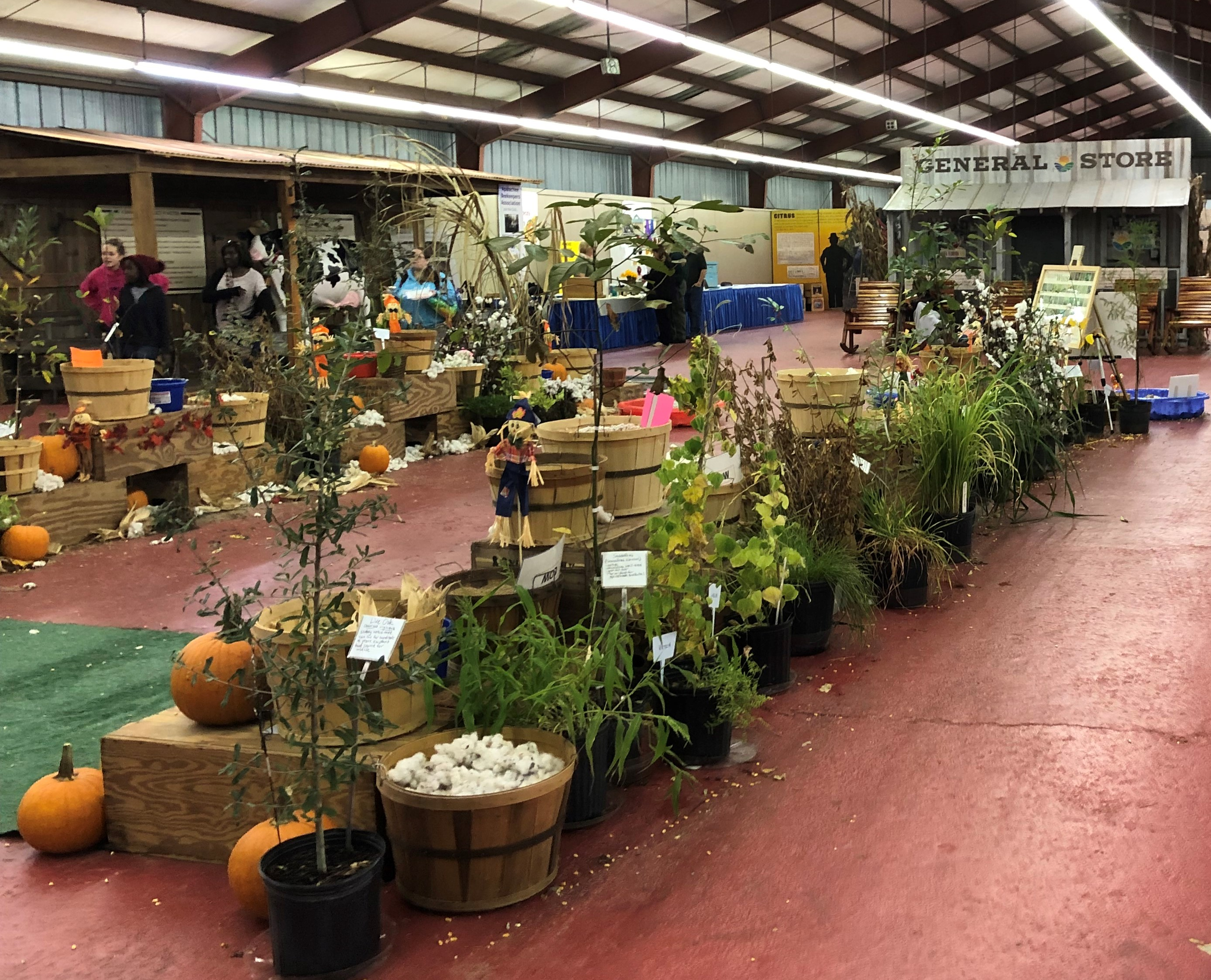 There are hands-on agricultural crop displays and much more in the UF/IFAS building at the North Florida Fair. Photo by Molly Jameson.