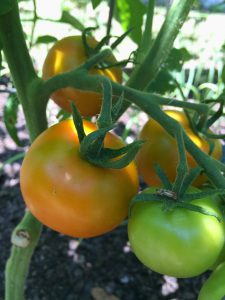 Become more self-sufficient by growing your own healthy food in your backyard. Photo by Molly Jameson.