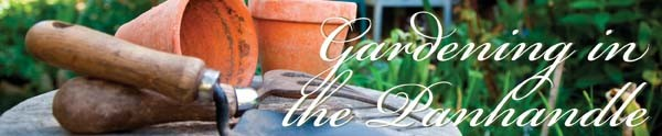 Gardening in the Panhandle: LIVE !
