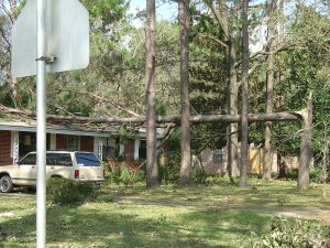 Broken pine that fell on roof of home
