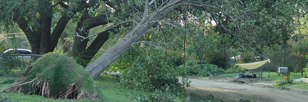 Preventive Tree Maintenance Before High Winds Strike