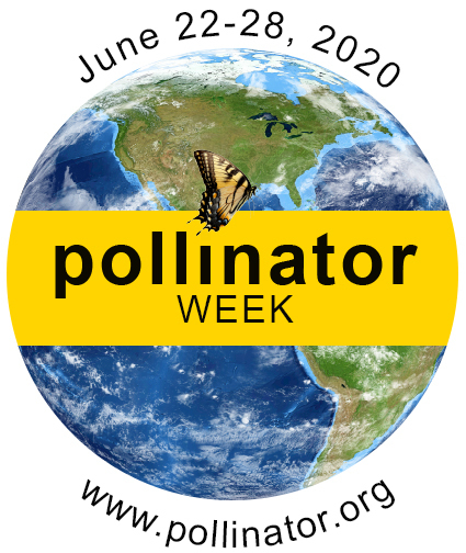 Celebrate our Pollinators This Week (and Every Week!)