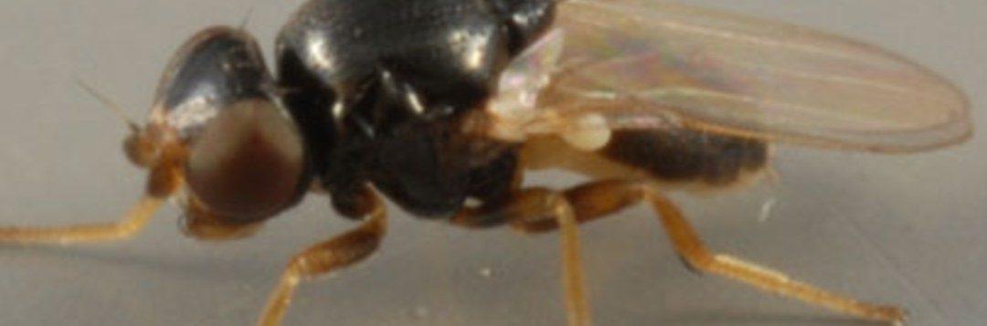 Annoying Gnats Abound in Northwest Florida this Summer