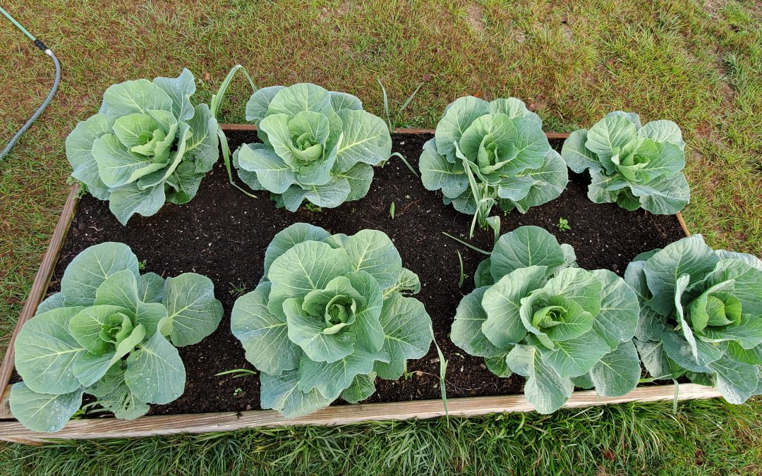 Video Feature: Answers to Common Questions about Raised Bed Gardens