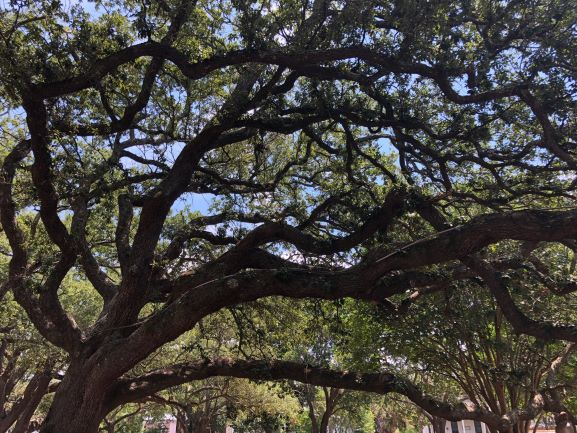 Property Law and Tree Damage