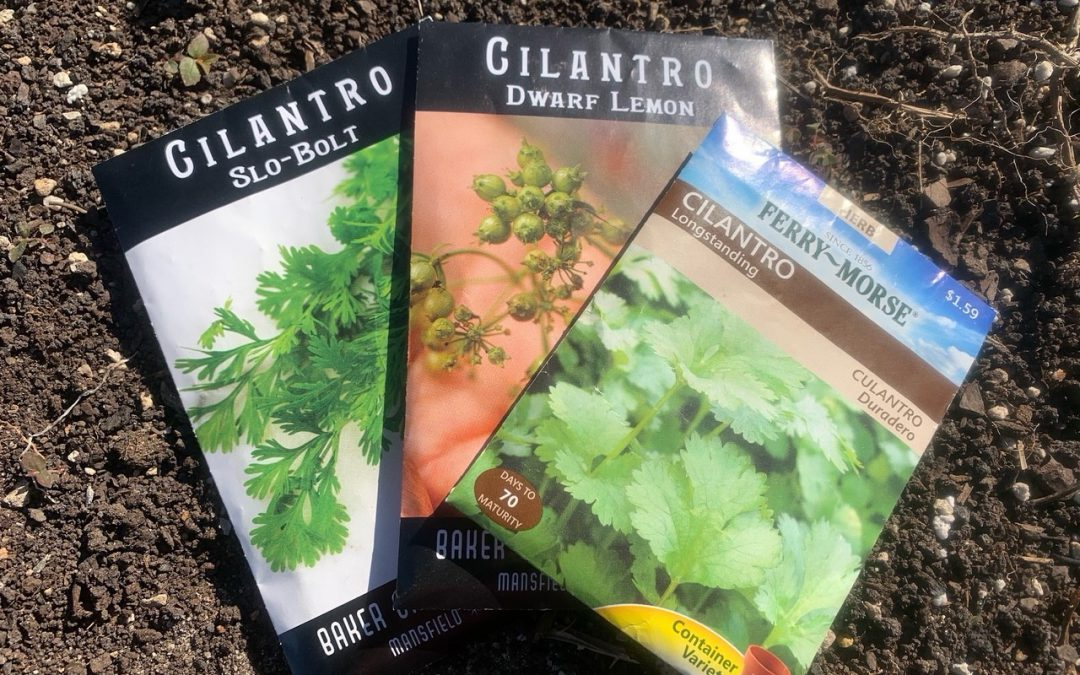 Video: Getting Started with Cilantro