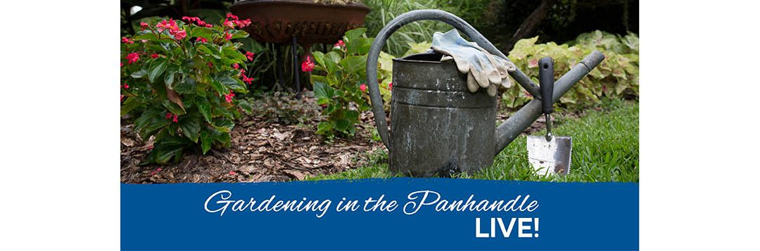 Gardening in the Panhandle LIVE! 2021