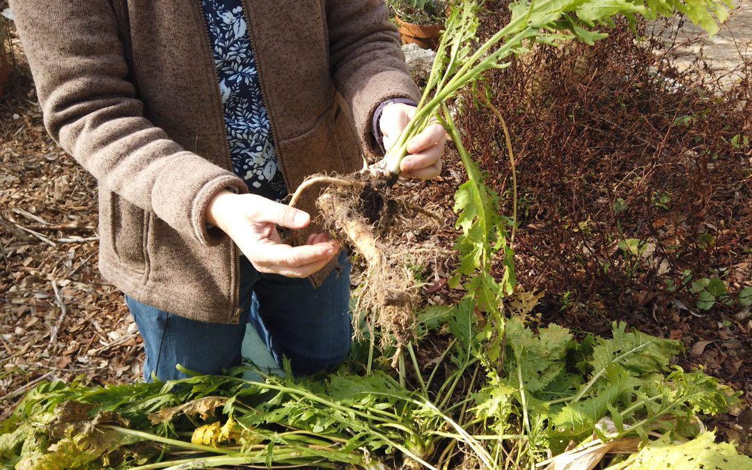 Video: Growing and Preparing Horseradish