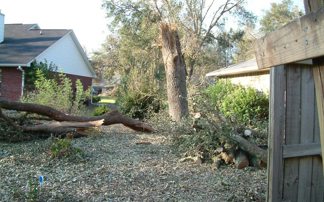 (Video) Prepare for the Storm: Trees and Property Lines